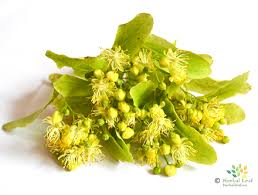 linden flower linden herbal medicine herbaleaf eu