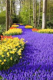 flower garden holland garden pinterest holland flower and