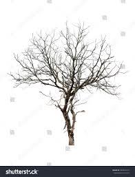 tree shape isolate stock photo 304391414