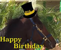 Horse Birthday Meme - photos and memes thoroughbred u