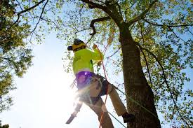 bartlett tree experts tree removal felling and stump removal