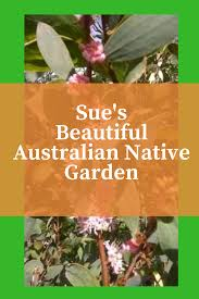 the native plant centre recommended plants archives australian native nursery