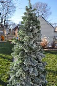 how to care for a flocked tree flocked trees artificial