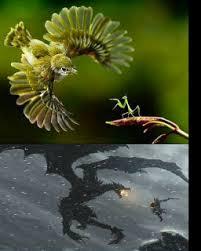Mantis Meme - badass praying mantis meme by surface memedroid