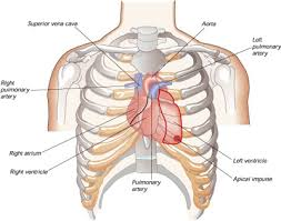 which side of chest is the on health advisor