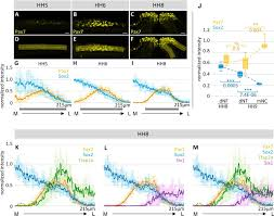 dynamic transcriptional signature and cell fate analysis reveals