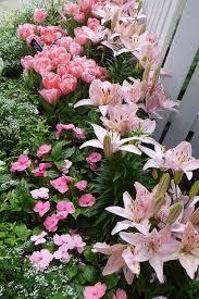 best 25 pink garden ideas on pinterest pink succulent white