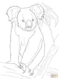 koala bear tree coloring free printable coloring pages