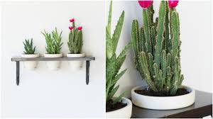 plant wall hangers indoor make a hanging indoor garden by brittany goldwyn live creatively