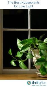 biggest house plants 282 best houseplants images on pinterest houseplants plants and