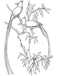 flycatcher birds coloring page free printable coloring pages