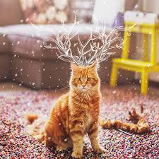 kristina makeeva l u0027art de la photo de chat par kristina makeeva