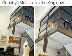 Mufasa Meme - dopl3r com memes goodbye mufasa im the king now