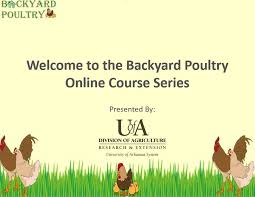 Backyard Poultry For Sale by Free Online Course For Creating Backyard Poultry Farms Poultry