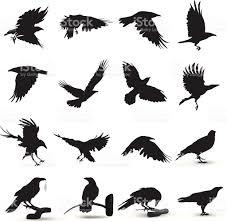 halloween raven background black and white raven silhouette stock vector art 481937583 istock