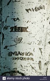 names carved on silver birch tree trunk stock photo royalty free