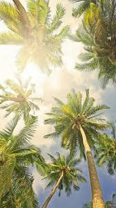 Palm Tree Wallpaper 16 Best Wallpapers Images On Pinterest Minimalist Wallpaper