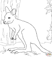 white wallaby coloring page free printable coloring pages
