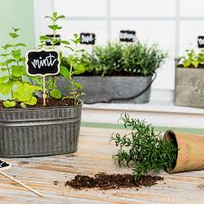 Indoor Container Gardening - bring some greenery into your kitchen with indoor container