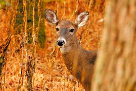 petition alert stop deer hunting in the entire town of
