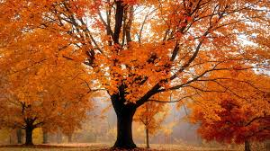 cool trees forest fun landscapes forest trees cool large excelent nature tree