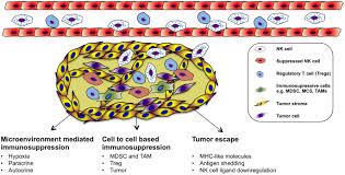 frontiers natural killer cell based therapies targeting cancer