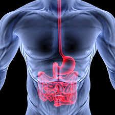 Webmd Human Anatomy About Me U2014 Essentials By Dk