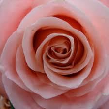 seattle florists northwest wholesale florists florists 525 s front st georgetown
