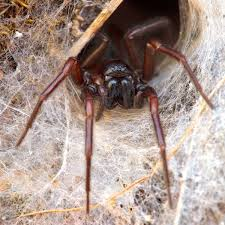 How To Keep Spiders Out Of Your Bed How To Get Rid Of Spiders Planet Natural