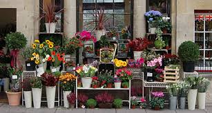 Flower Store Bath 360 Shopping In Bath Shops In Bath Recommended Shopping
