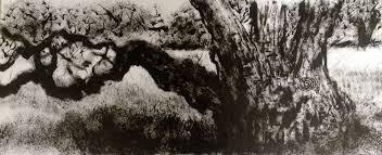 the celtic oak eaton