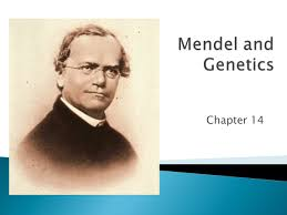 mendel and genetics chapter ppt video online download