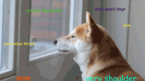 What Breed Is Doge Meme - the life and death of doge 2013 s greatest meme the daily dot