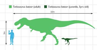 5 meters to feet file tarbosaurus scale svg wikimedia commons