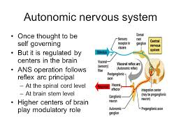 Role Of Brain Stem Peripheral And Autonomic Nervous System The Objective Of The