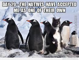 Cute Penguin Meme - penguin cat very funny pics