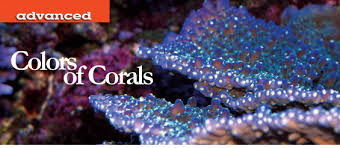 Reef Aquarium Lighting Lighting For Reef Aquariums Factors That Influence Coral Coloration