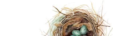 backyard birds u0026 nests unit study unit study ideas