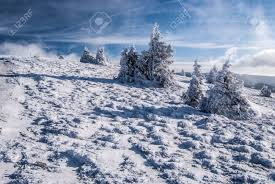 winter mountain meadow with snow isolated small trees and blue