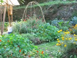 october garden permaculturing in portugalpermaculturing in portugal