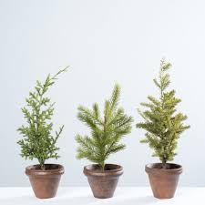 potted christmas tree potted christmas tree magnolia chip joanna gaines