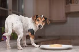 what can dogs eat human foods to feed your dog or avoid 2017