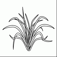 plant coloring pages printable alphabrainsz net
