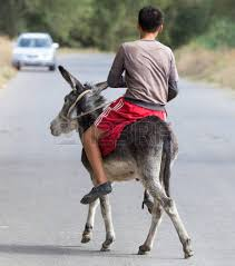 donkey riding stock photos royalty free business images