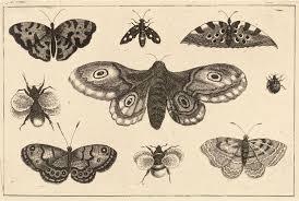 35 moth tattoos designs
