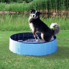 gadgets for dogs and owners