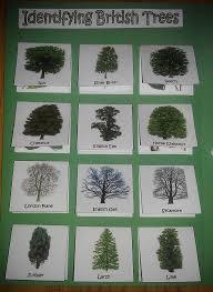 trees lapbook iman u0027s home