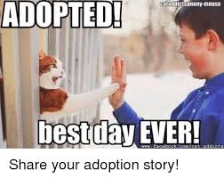 adopted cataddictsanony mouse best day wwwfacebookcomcat addicts