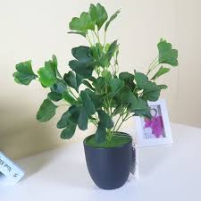 small potted plants china small green plants china small green plants shopping guide at