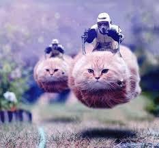 Star Wars Cat Meme - stormtroopers on cat speeder bikes star wars catsstar wars cats